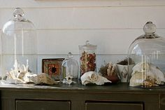 hiding decorative objects under bell jars (cant be stolen); painted wood paneling; animal bones as decoration