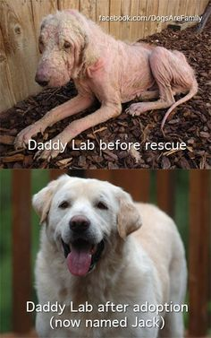 never ceases to amaze me what a great home, good vet, quality for and TONS of love can do! Poor baby! Go adopt an abused animal today!