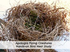 Apologia Flying Creatures Bird Nest Study from Live and Learn Farm