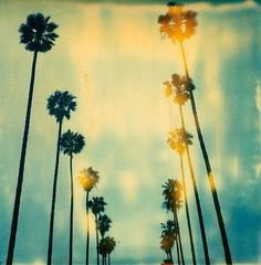 Great photo beverly hills, california girls, tree, palm springs, travel tips, blue skies, los angeles, west coast, place