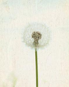 Botanical Art Dandilion
