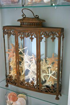 Starfish display.