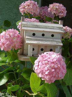 birdhouse among the hydrangea
