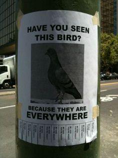 Pigeon sign