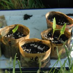 Newspaper Seedling Pots:  Making your own seedling pots is an easy and inexpensive way to reduce your footprint.