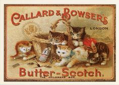 scotch kitten, cat, bowser butterscotch, kitti advertis, vintage labels, vintag advertis, butter scotch, kittens, vintage ads