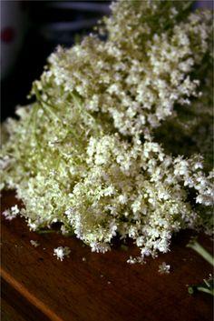 white flowers, elderflow fritter, garden flower