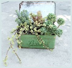 vintage containers and succulents <3