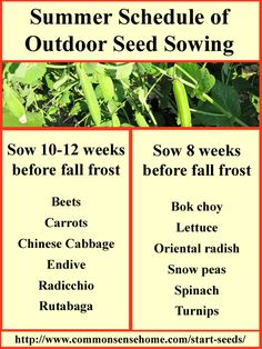 Summer Seed Sowing Chart - Plant Now for Fall Harvest