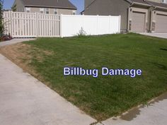 Does your lawn look like this? Check out if you could have Grubs & Billbugs and what you can do