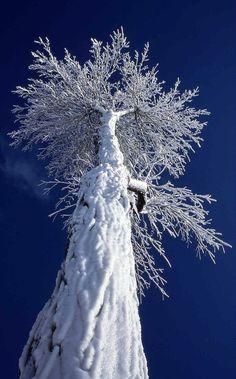 ✯ snowy tree ✯