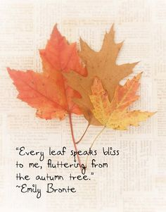 Fall Leaves Autumn Emily Bronte Quote by ShadetreePhotography,