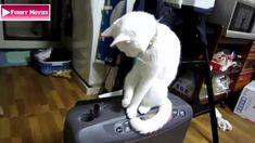 Top 10 Funny Animal Videos | Top Cute Animal Videos 2014 | Funny Videos ...