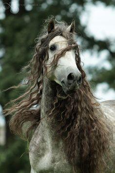 I want this gorgeous horse's amazing wavy locks! :) #mane #horse #animals #cute