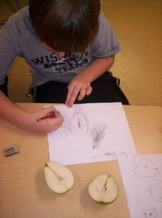 observational drawing   Project-Based Homeschooling