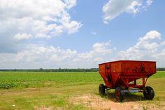 Hardy Farms Peanuts