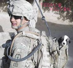 Dog reunited with wounded soldier who rescued him overseas.  I love this story.