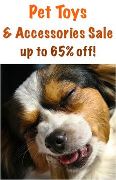 Pet Toys and Accessories Sale: up to 65% off!