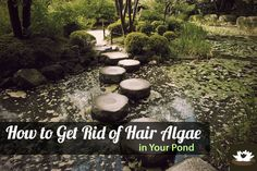 Backyard Ponds And Water Features On Pinterest Ponds Garden Ponds And Koi Ponds