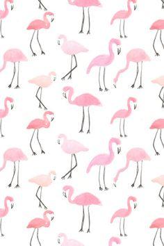 Flamingos | Abby Gal