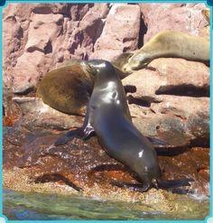 Best way to enjoy La Paz? Swim with the locals!
