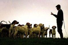 Hound dogs carefully taking instructions