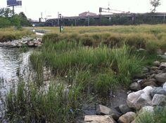 River bank along the #Bronx River by Hunts Points.