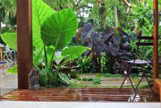 Tropical plants - love shade gardens