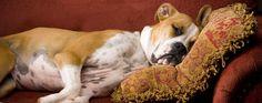 The Peabody Memphis | Memphis Pet Friendly Hotels | Memphis Hotels Suites Packages