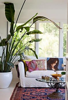 Bring the outdoors in with a giant houseplant.