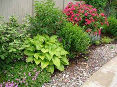 Love how Hostas add to the perennial garden.