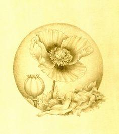 Opium Poppy Tattoo  Opium Tattoo