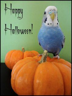 Cooper's Halloween