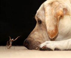 #dog #praying mantis