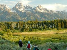 Travel to Jackson Hole, Wyoming. Help scientists audit declining bird species and see an amazing part of the world in the process. Click image for more info.