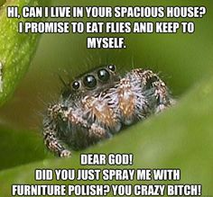 How pissed is this spider!
