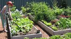 I can see veg garden boxes like this in my kitchen garden. Yes please.