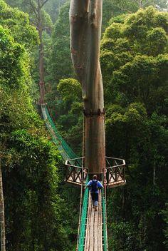 Rainforest Canopy Walkway, Borneo :