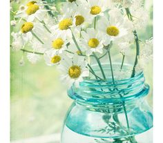 White Daisy Photograph Turquoise Shabby Chic Home. Summer art for your cottage!
