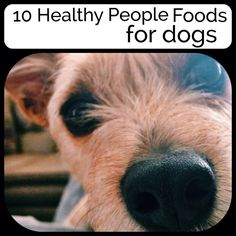 Here are 10 healthy people foods that dogs can safely eat.  #vitamins_for_dogs #homemade_dog_treats #how_to_make_dog_food