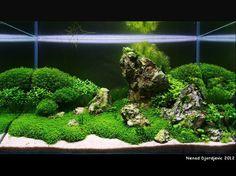 Aquarium ~ Aquascapes on Pinterest