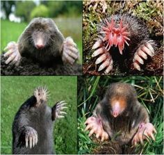 How to Get Rid Of Garden Moles OHMYGAWD if this is what's living in my garden I am never going out there again!!!!
