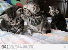 Kitty got secrets. :)