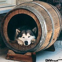 I told the dog not to drink and nap...Easy Wine Barrel Dog House