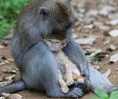 This loving monkey