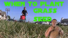When to plant grass seed. lawn care tips