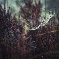 Webs by - David Olsson -, via Flickr
