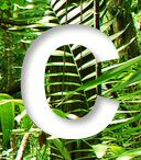 Climate Educator Guide -- A Guatemala Case Study | Rainforest Alliance