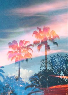 palm tree, summer vacations, color, dream, california, palm springs, trees, summer vibes, beach
