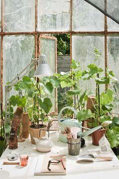 inspired work space plant, green thumb, jardin, green corner, green trend, greenhous, green hous, botan dream